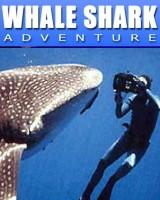 whale sharks swim